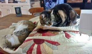 De Quiltinspectie - katten op de quilt ...