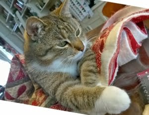Kater Tommy op Quilt Day In Giverny