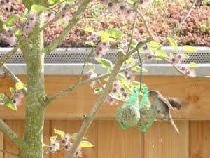 musje wat vogelvoer eet